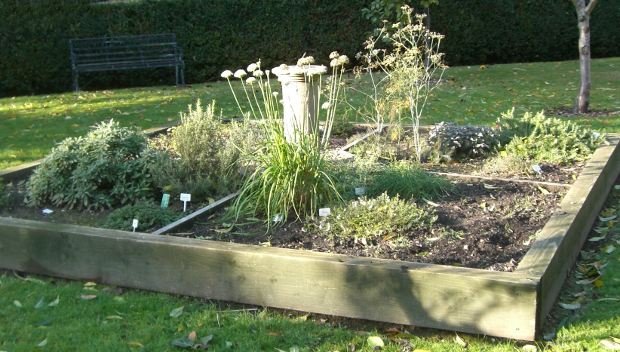herb-bed